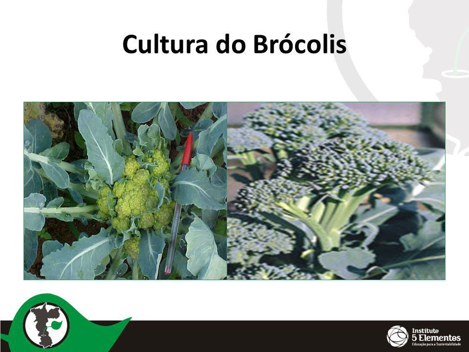 Cultura do Brócolis