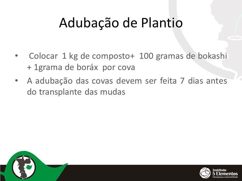 Adubação de Plantio Colocar 1 kg de composto+ 100 gramas de bokashi + 1grama de boráx por cova.