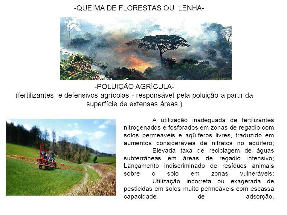 QUEIMA DE FLORESTAS OU LENHA-