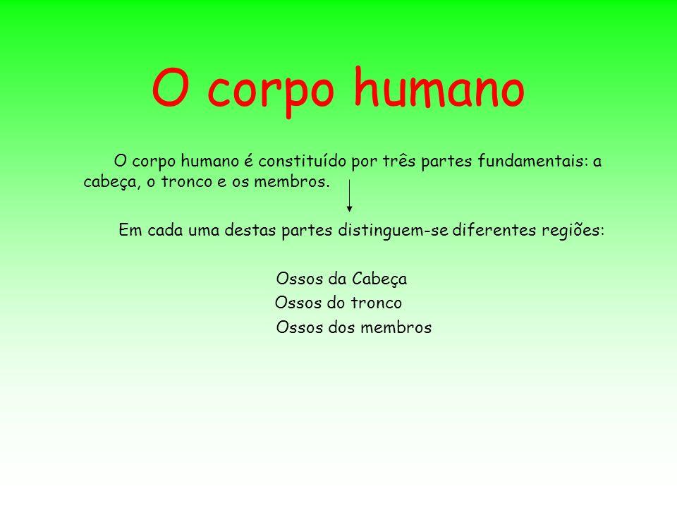 O corpo humano O corpo humano é constituído por três partes fundamentais: a cabeça, o tronco e os membros.