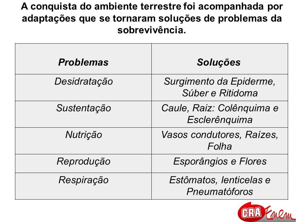 Surgimento da Epiderme, Súber e Ritidoma Sustentação