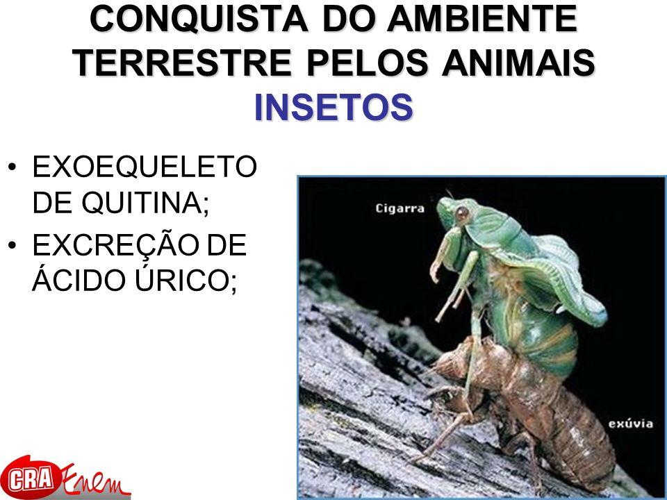 CONQUISTA DO AMBIENTE TERRESTRE PELOS ANIMAIS INSETOS