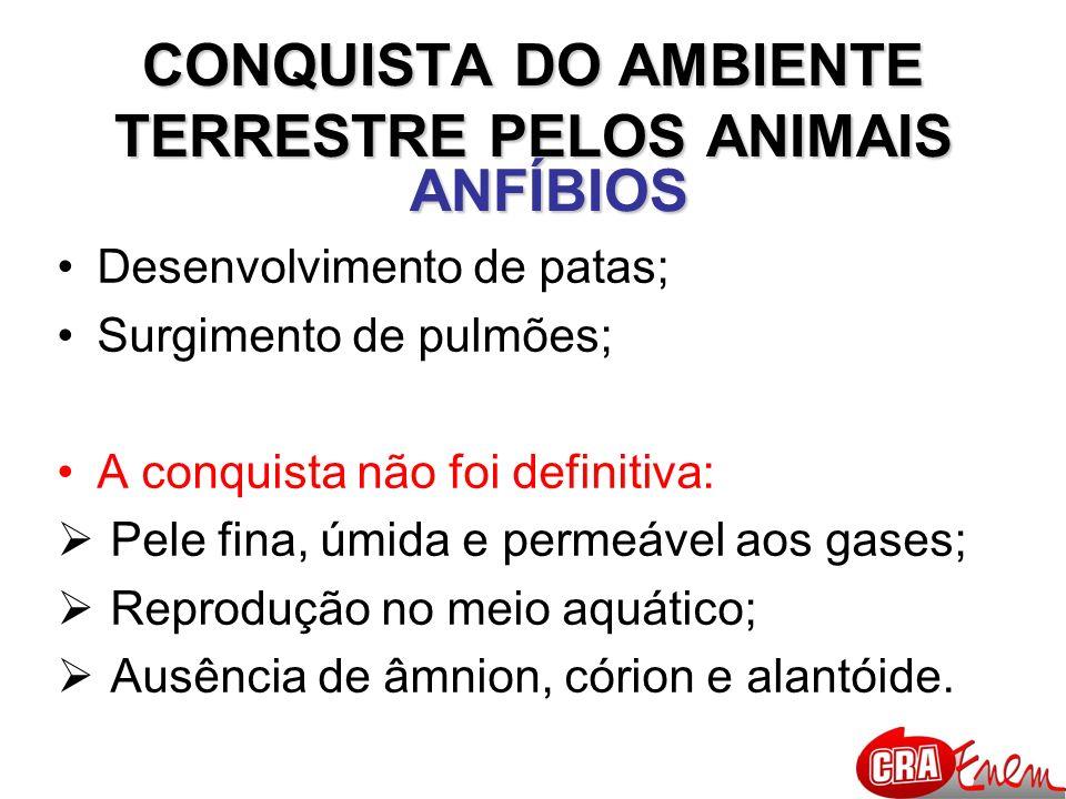 CONQUISTA DO AMBIENTE TERRESTRE PELOS ANIMAIS