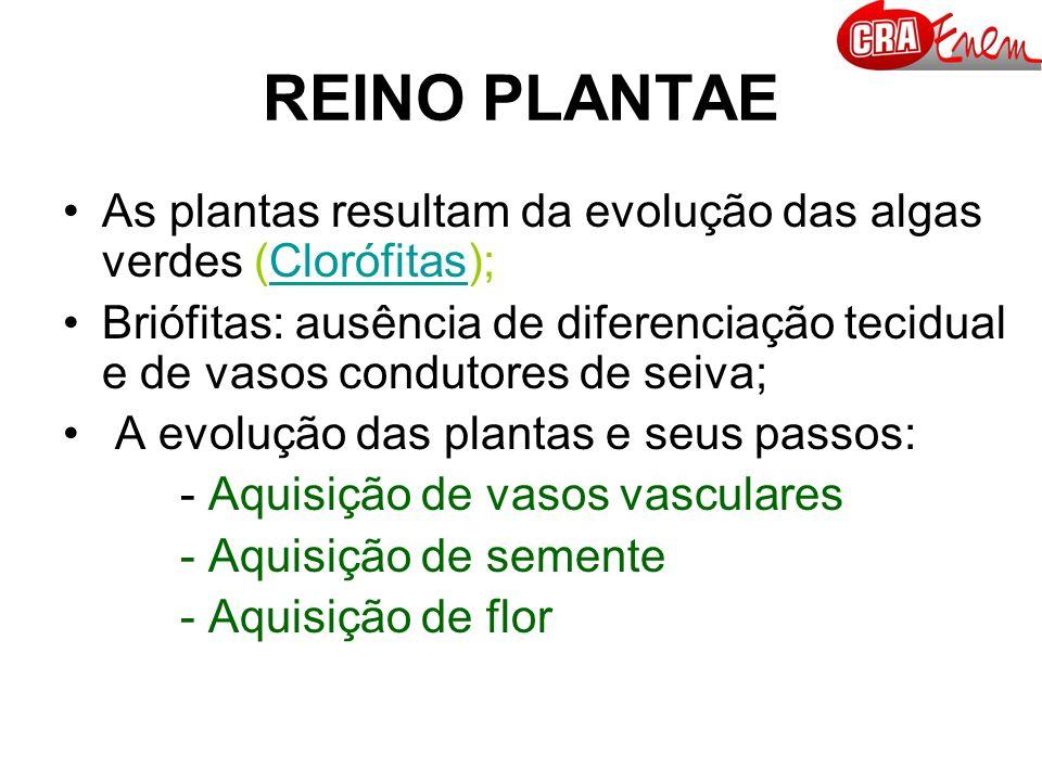 REINO PLANTAE As plantas resultam da evolução das algas verdes (Clorófitas);