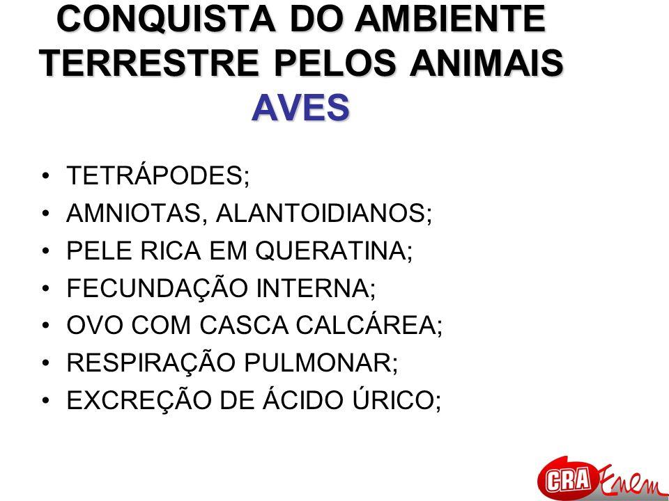 CONQUISTA DO AMBIENTE TERRESTRE PELOS ANIMAIS AVES