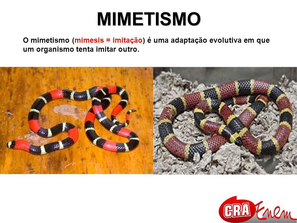 MIMETISMO O mimetismo (mimesis = imitação) é uma adaptação evolutiva em que um organismo tenta imitar outro.