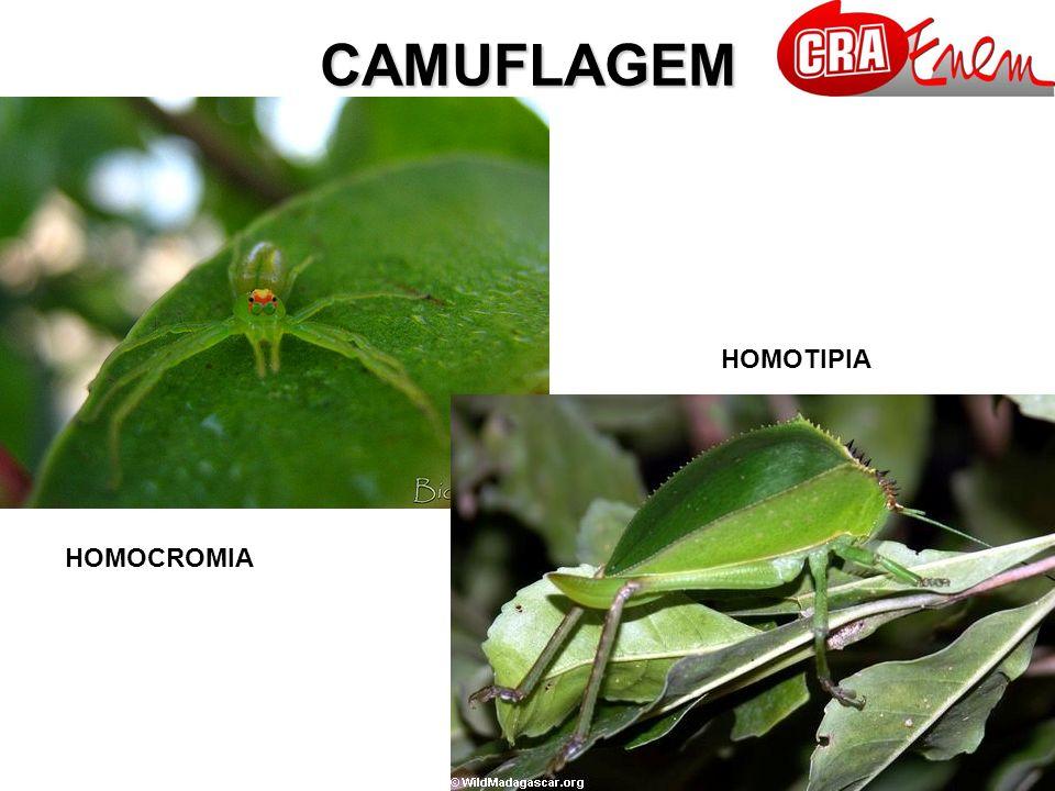 CAMUFLAGEM HOMOTIPIA HOMOCROMIA
