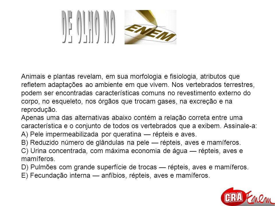 DE OLHO NO