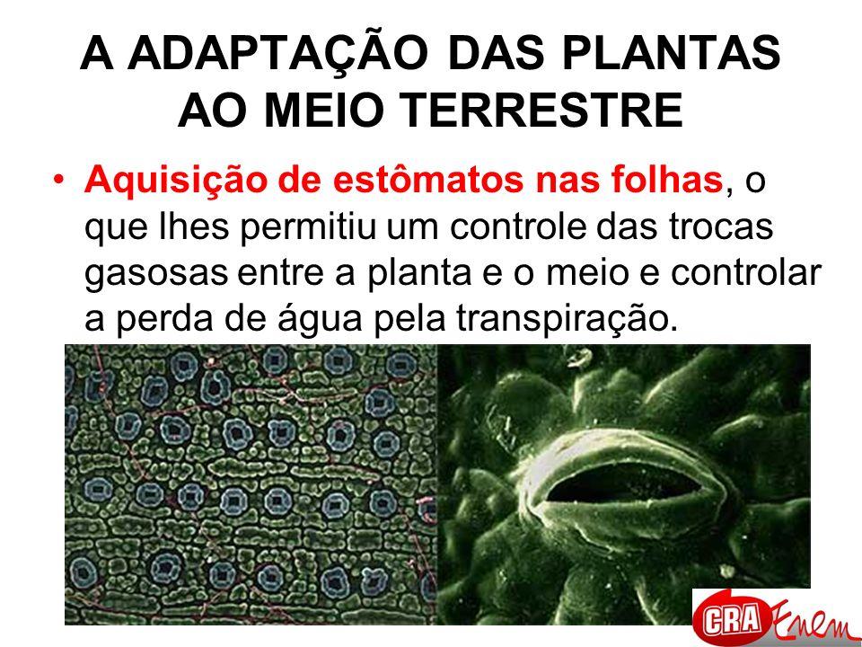 A ADAPTAÇÃO DAS PLANTAS AO MEIO TERRESTRE