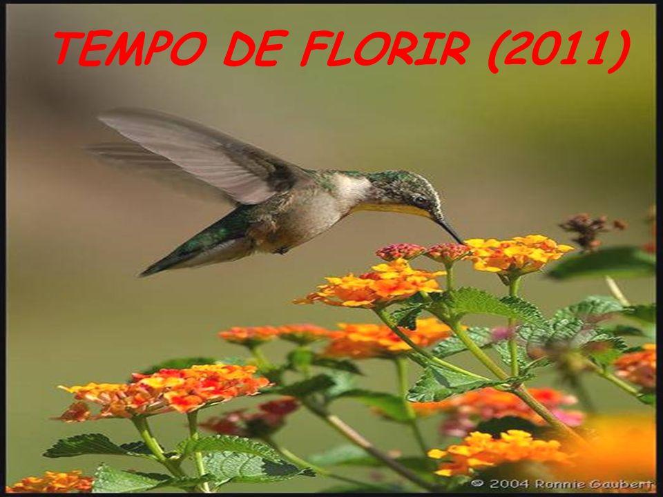 TEMPO DE FLORIR (2011)