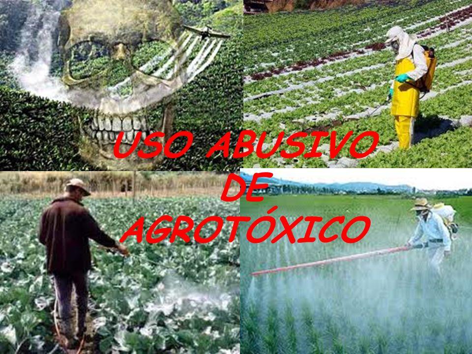 USO ABUSIVO DE AGROTÓXICO