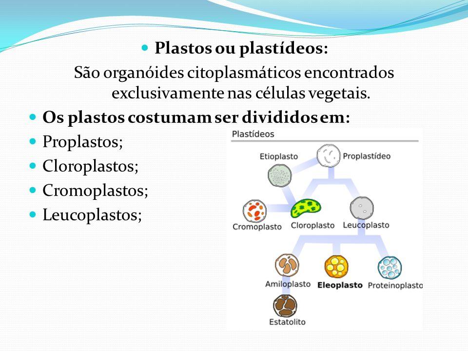 Plastos ou plastídeos: