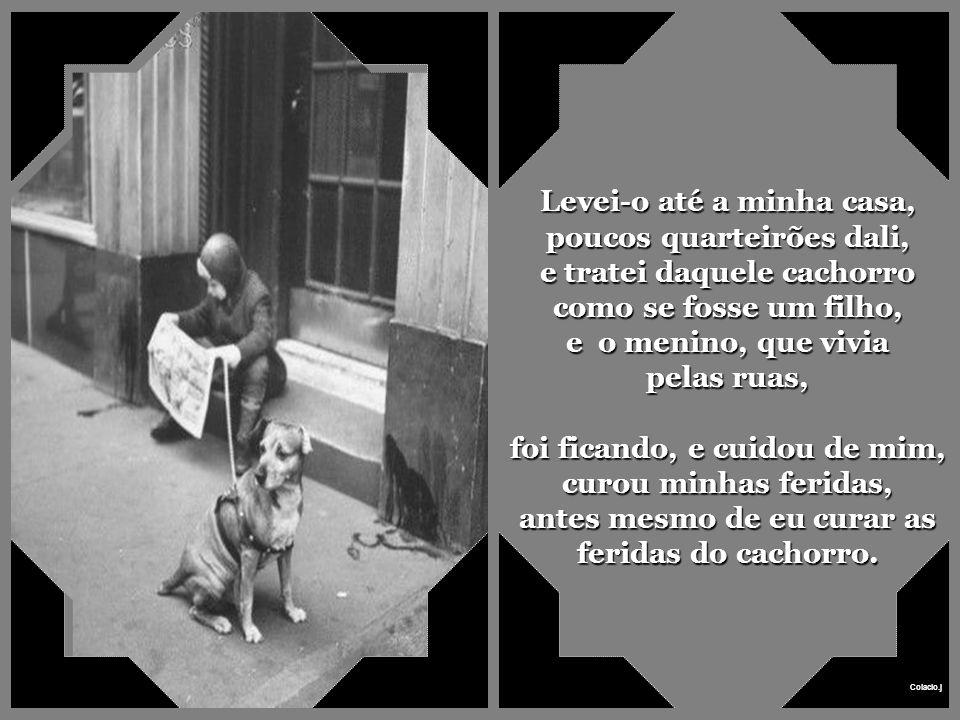 Levei-o até a minha casa, poucos quarteirões dali, e tratei daquele cachorro como se fosse um filho, e o menino, que vivia pelas ruas,