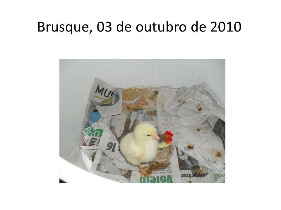 Brusque, 03 de outubro de 2010