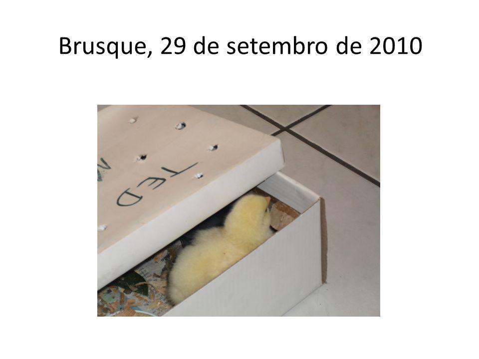 Brusque, 29 de setembro de 2010
