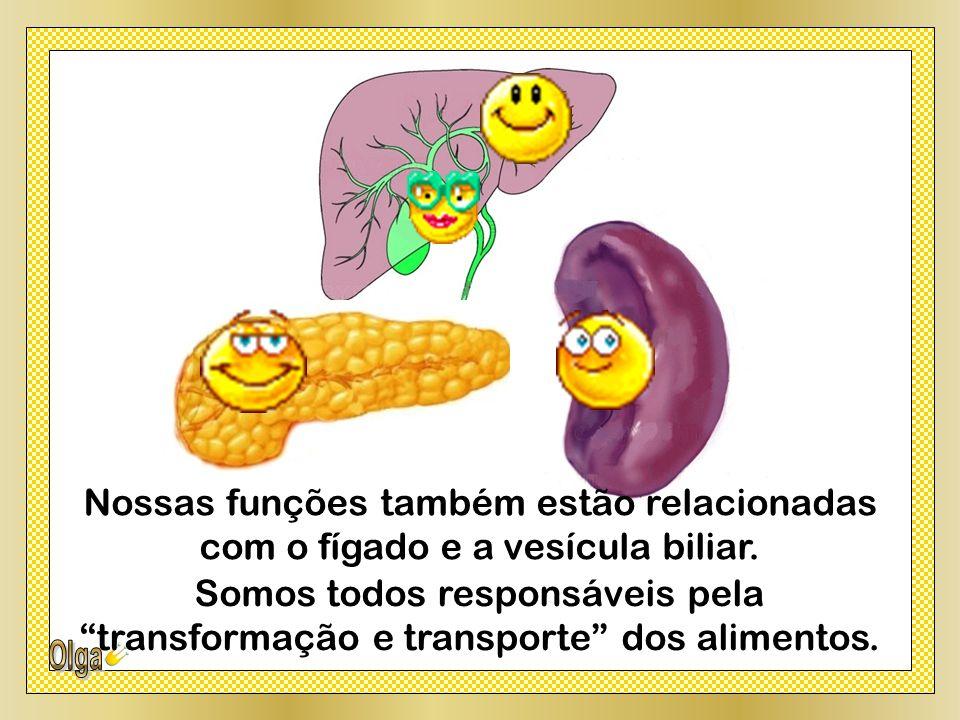 Nossas funções também estão relacionadas com o fígado e a vesícula biliar.
