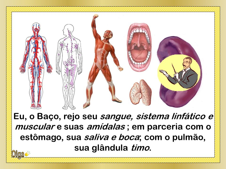 Eu, o Baço, rejo seu sangue, sistema linfático e muscular e suas amídalas ; em parceria com o estômago, sua saliva e boca; com o pulmão,