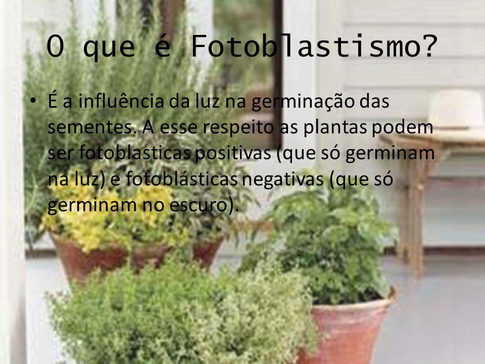 O que é Fotoblastismo