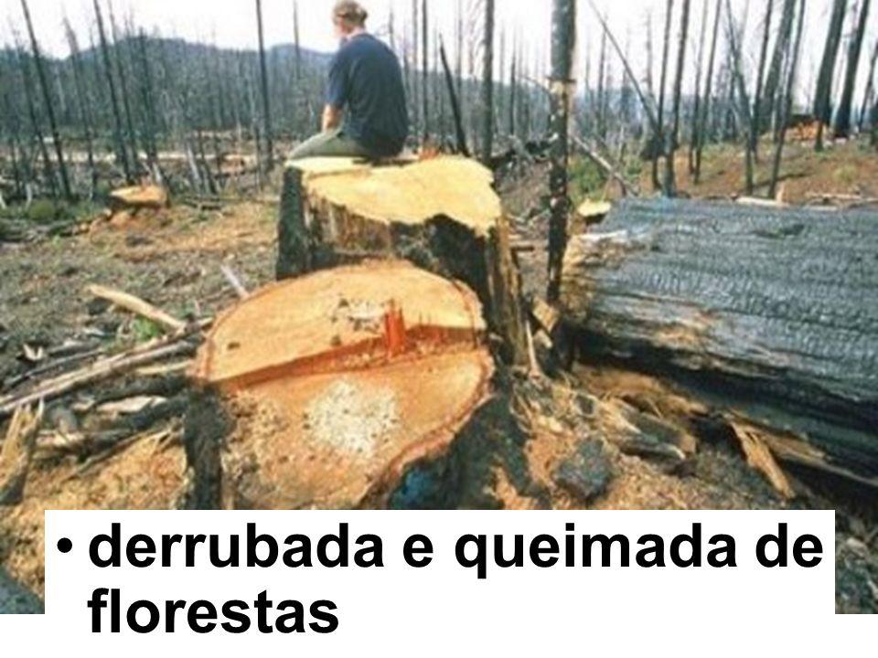 derrubada e queimada de florestas