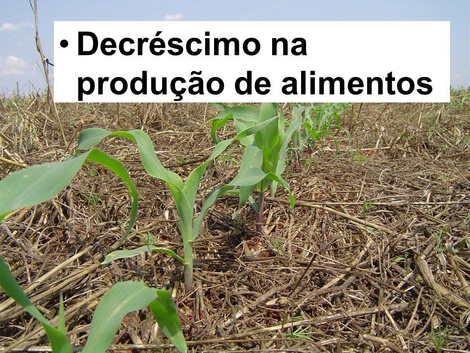 Decréscimo na produção de alimentos