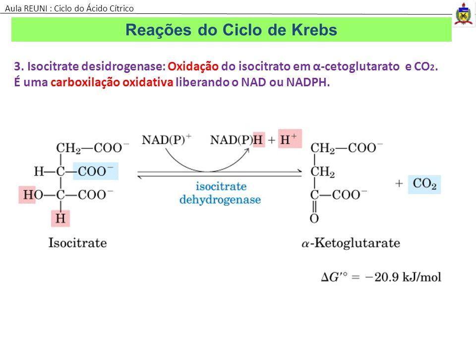 Reações do Ciclo de Krebs