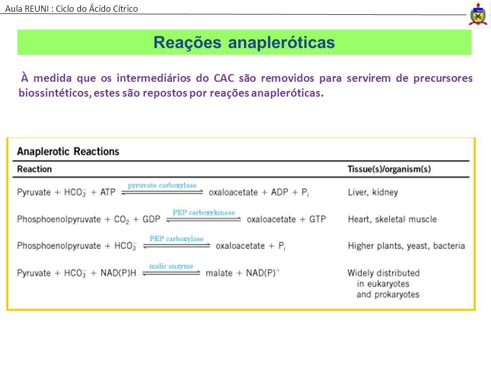 Reações anapleróticas