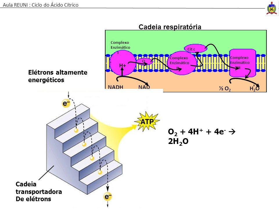 O2 + 4H+ + 4e-  2H2O Cadeia respiratória H+ Elétrons altamente