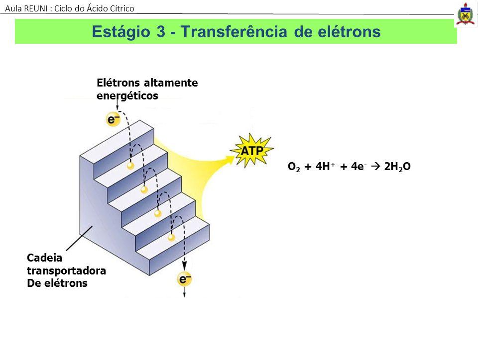 Estágio 3 - Transferência de elétrons