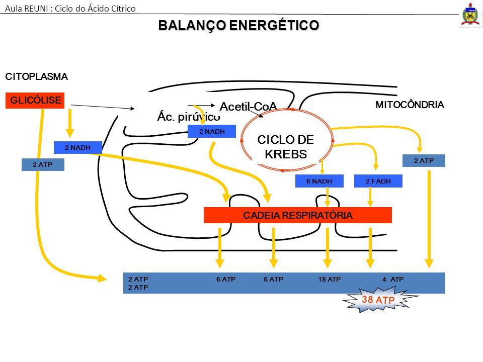 BALANÇO ENERGÉTICO Acetil-CoA Ác. pirúvico CICLO DE KREBS