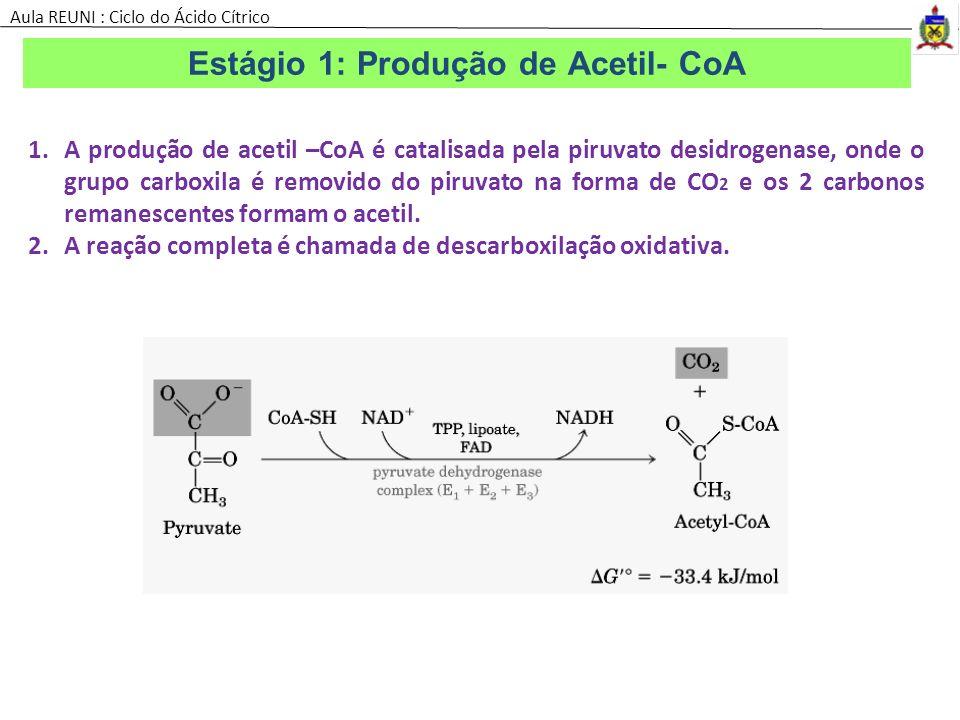 Estágio 1: Produção de Acetil- CoA