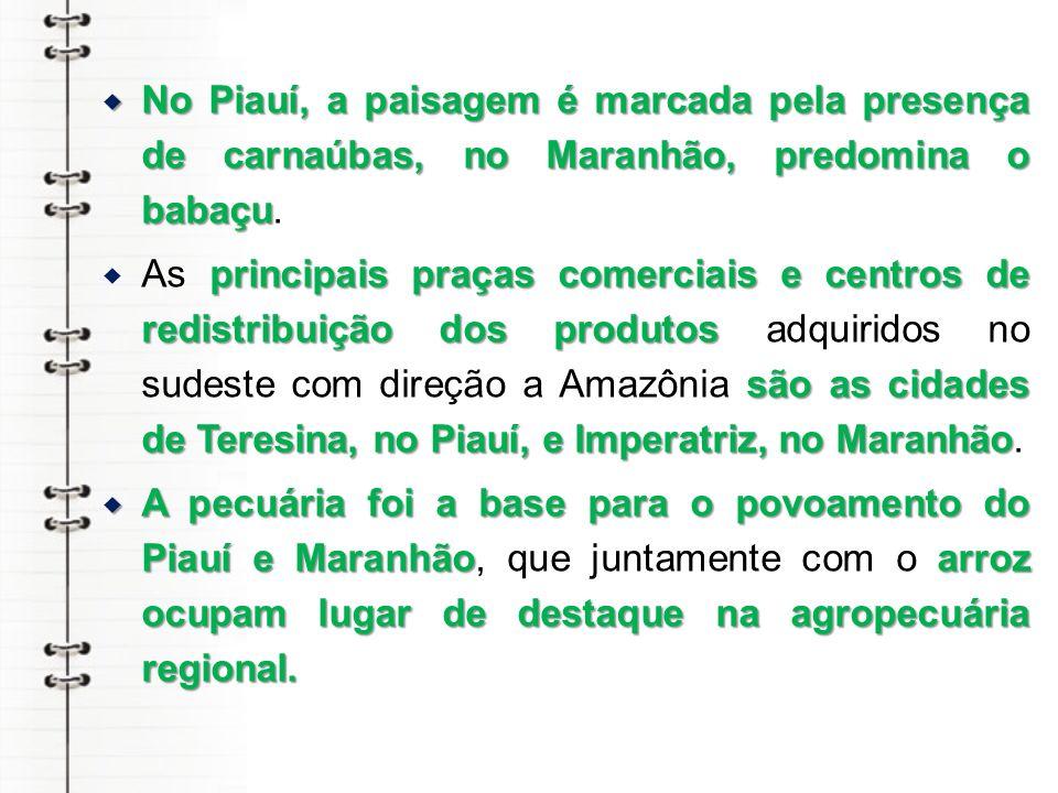 No Piauí, a paisagem é marcada pela presença de carnaúbas, no Maranhão, predomina o babaçu.