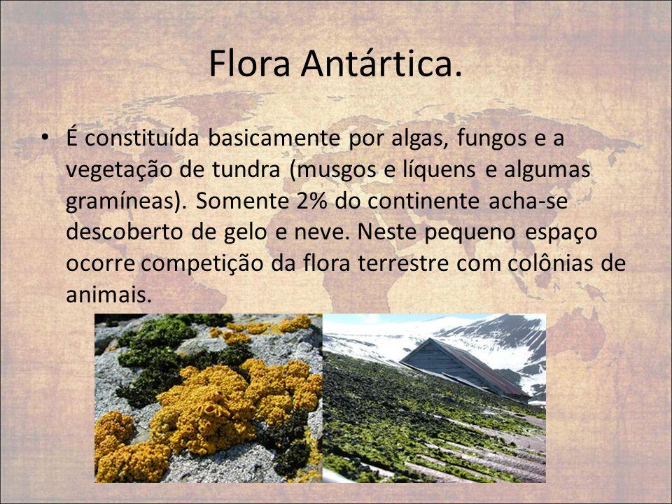 Flora Antártica.