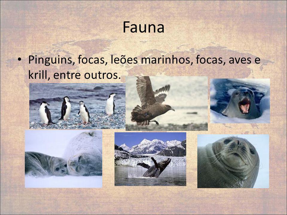 Fauna Pinguins, focas, leões marinhos, focas, aves e krill, entre outros.
