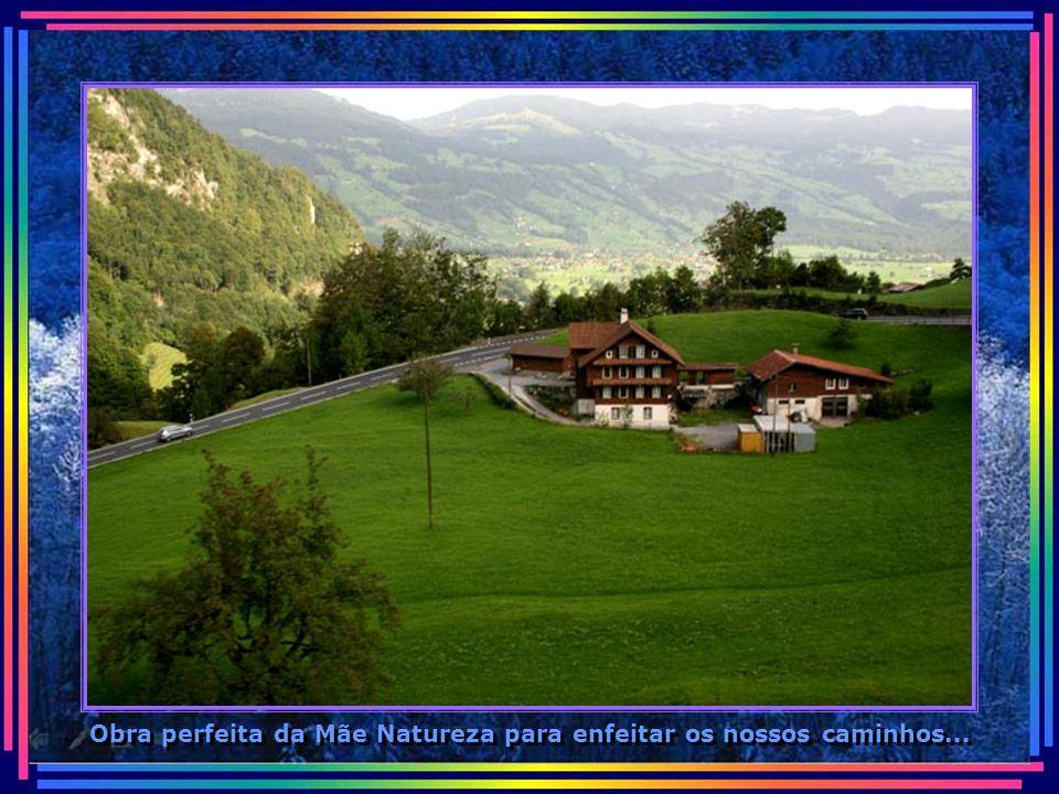 Obra perfeita da Mãe Natureza para enfeitar os nossos caminhos...