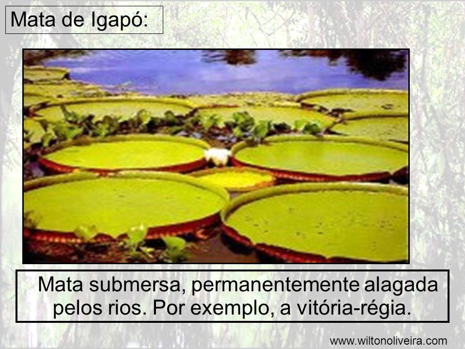 Mata de Igapó: Mata submersa, permanentemente alagada pelos rios.