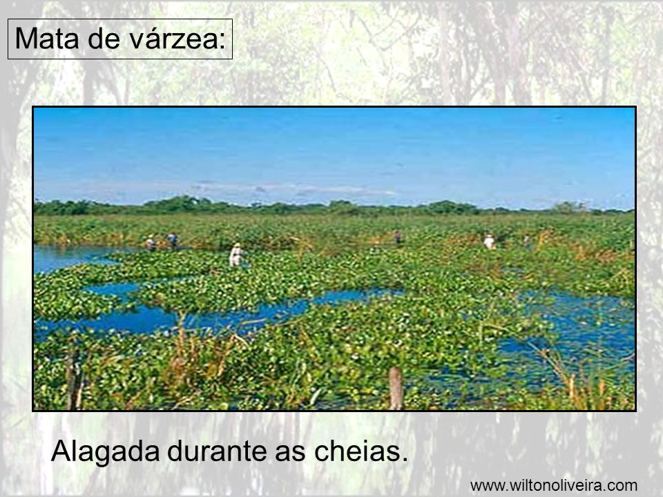 Alagada durante as cheias.