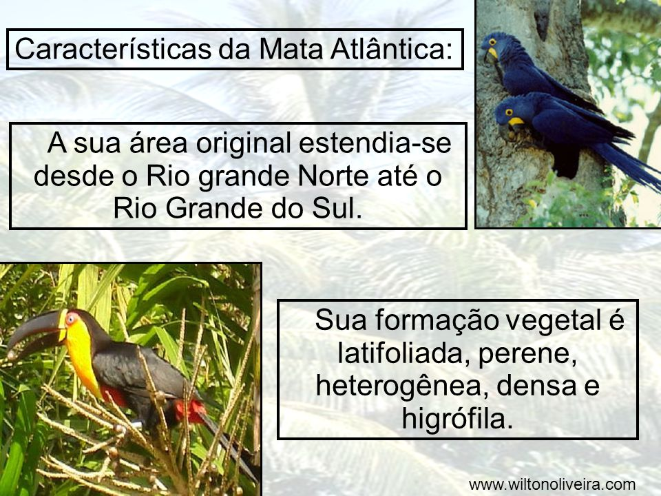 Características da Mata Atlântica: