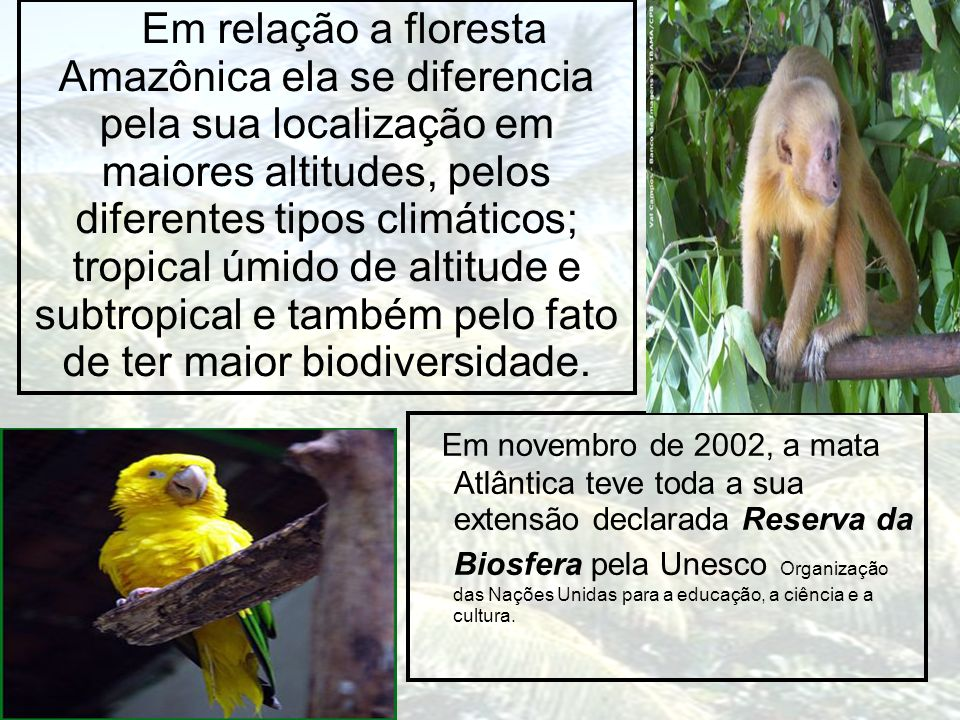 Em relação a floresta Amazônica ela se diferencia pela sua localização em maiores altitudes, pelos diferentes tipos climáticos; tropical úmido de altitude e subtropical e também pelo fato de ter maior biodiversidade.