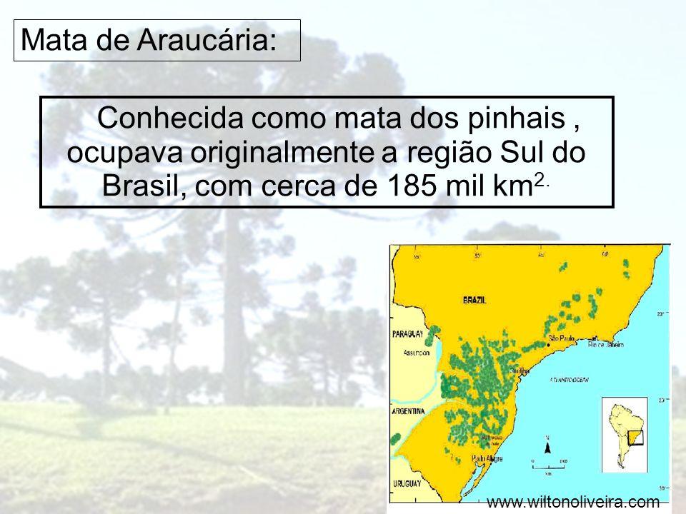 Mata de Araucária: Conhecida como mata dos pinhais , ocupava originalmente a região Sul do Brasil, com cerca de 185 mil km2.