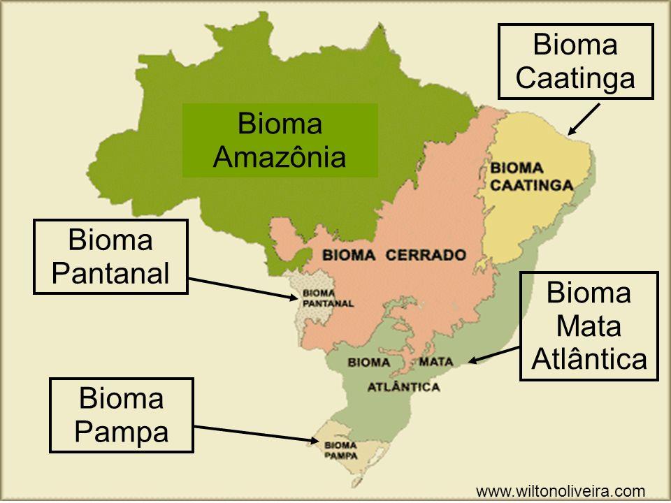 Bioma Caatinga Bioma Amazônia Bioma Pantanal Bioma Mata Atlântica