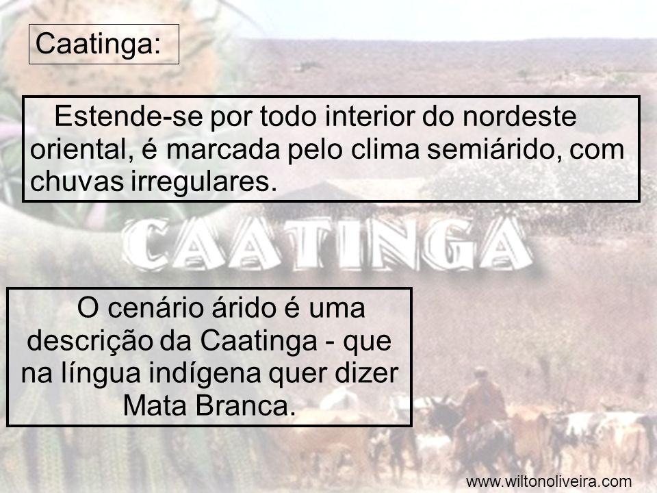 Caatinga: Estende-se por todo interior do nordeste oriental, é marcada pelo clima semiárido, com chuvas irregulares.
