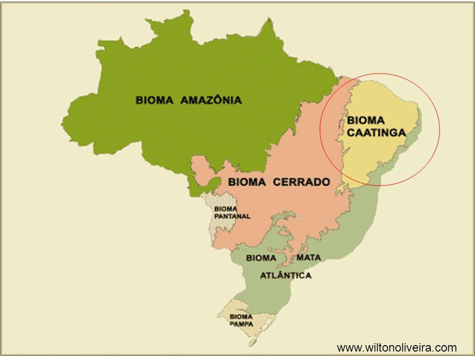 www.wiltonoliveira.com