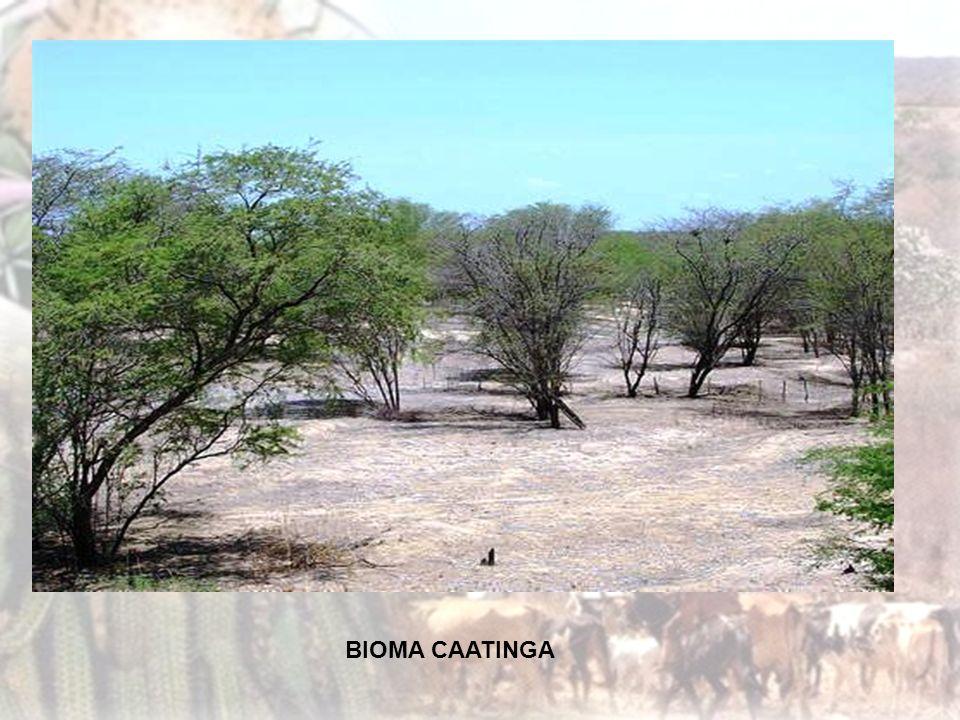O solo é rico em sais minerais e paupérrimo em matéria orgânica, pouco profundo e pedregoso. As plantas possuem raízes superficiais para o máximo de absorção destas águas.