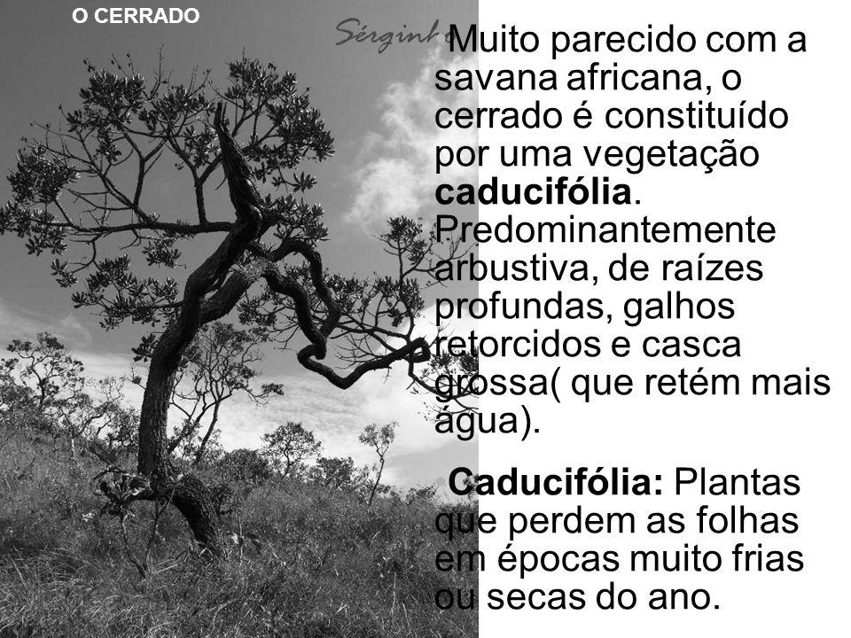 O CERRADO