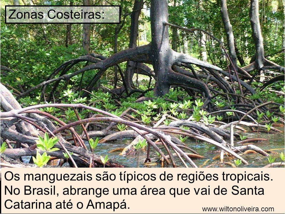 Zonas Costeiras: Os manguezais são típicos de regiões tropicais. No Brasil, abrange uma área que vai de Santa Catarina até o Amapá.