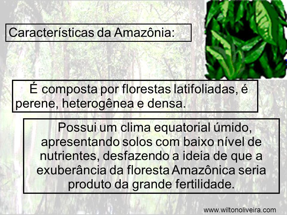 Características da Amazônia: