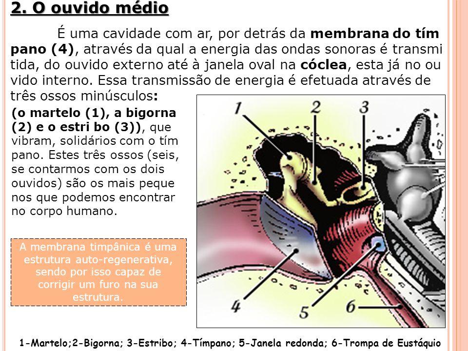 2. O ouvido médio