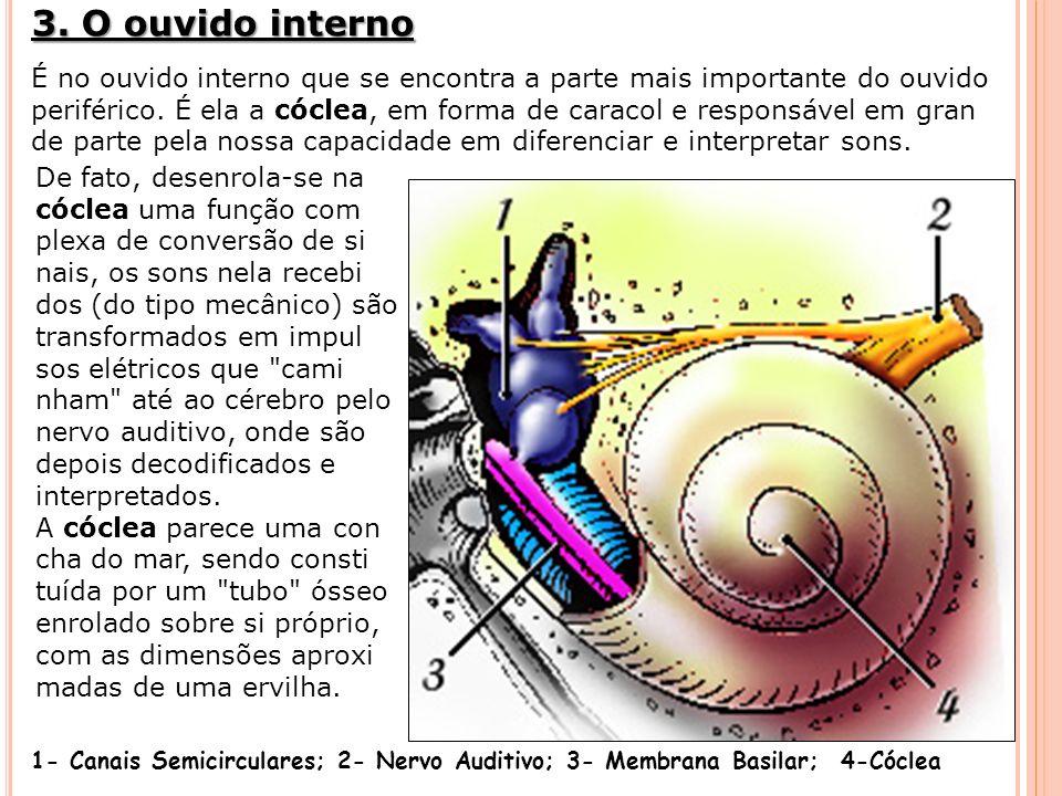 3. O ouvido interno