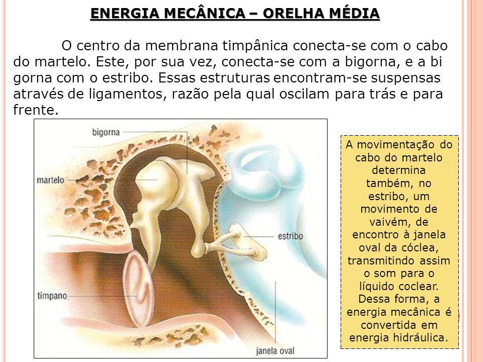 ENERGIA MECÂNICA – ORELHA MÉDIA