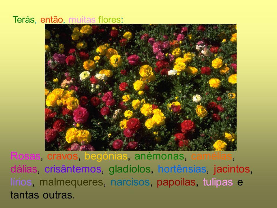 Terás, então, muitas flores: